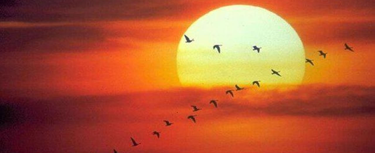 birds-flying-sunset